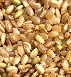 常吃六种米饭排毒又养颜 - leeyan59559.popo - 我的博客