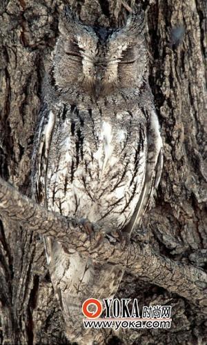 这些动物利用隐藏的艺术作为自己在自然界生存的法宝